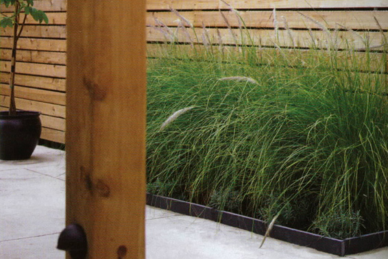 backyard plants feathery grass inspirational idea for concrete